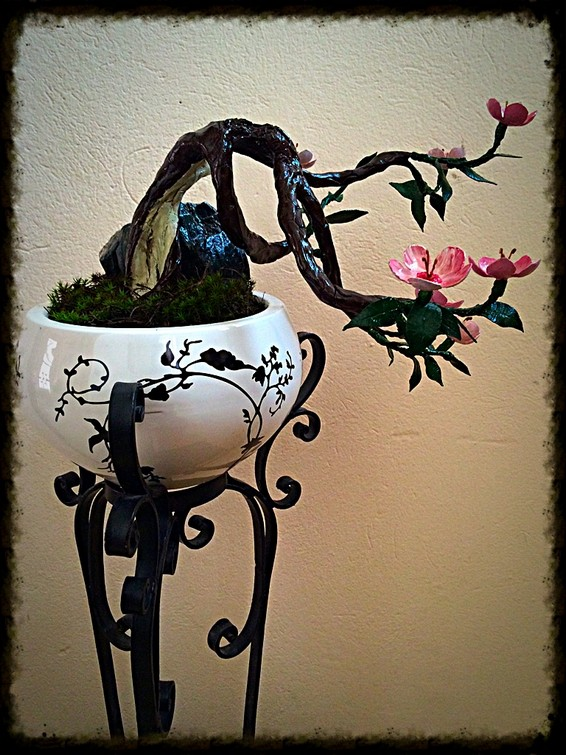 Galleria di luca landoni bonsai ciliegio for Bonsai ciliegio